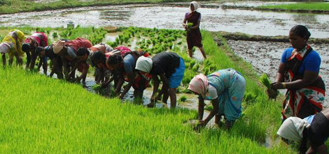 small scale agriculture