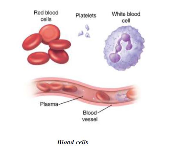 https://sdimg.blob.core.windows.net/images/User/23110/Original/blood_cell_1449144117754.png