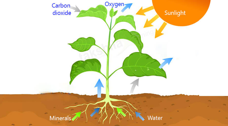 NCERT & CBSE Class 7 Science Nutrition in Plants Notes & Videos